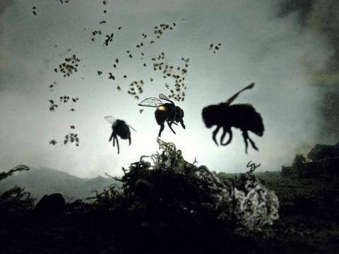 fun-bees-makaranko