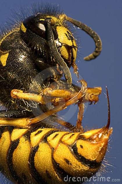 killer-bee-5099297