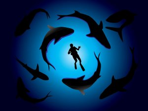 sharks-and-diver